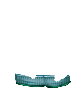 Adoptuj Chomik Lód