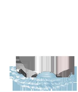 Adoptuj Chomik Crominavi