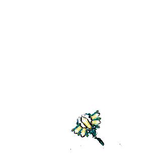 Adoptuj Chomik Złoty brokat
