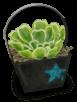 Mała roślina ogrodowa