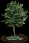 Drzewo 1