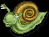 Miś Ślimak