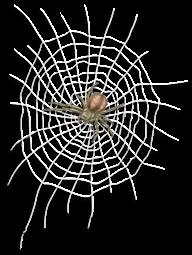 Więzienie na płótnie i pająku