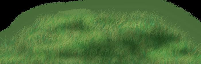 Piknikowa trawa