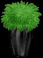 Grecja Roślina doniczkowa