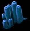 Wodorosty morskie 2