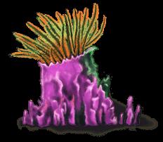 Wodorosty morskie 4