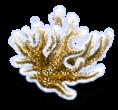 Wodorosty morskie 3