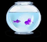 Bocal de poisson
