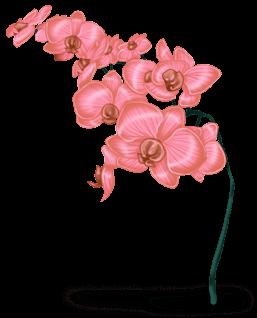 Śnieżny Kwiat