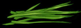 Miękkie ziele