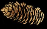 Szczypta chleba