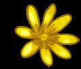 Wielki Kwiat