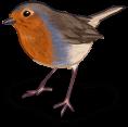 Wiosna ptak