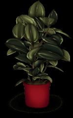Roślin z powrotem