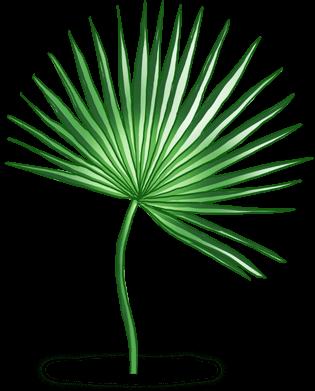 Tahiti Palm