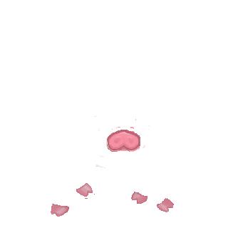Adoptuj Chomik Świnia