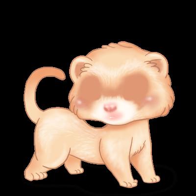 Adoptuj Fretka Krem albinosowy