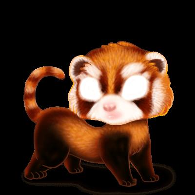 Adoptuj Fretka Panda Roux
