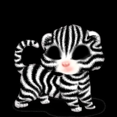 Adoptuj Fretka Zebra