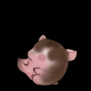Adoptuj Chomik Bald-Hamster