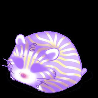 Adoptuj Chomik Irisor