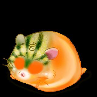 Adoptuj Chomik Melon