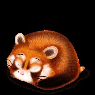Chomik Panda Roux