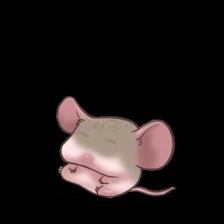 Adoptuj Mysz Szary