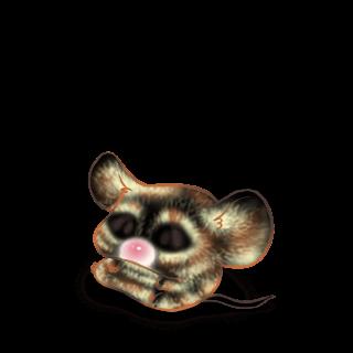 Adoptuj Mysz Cromimi