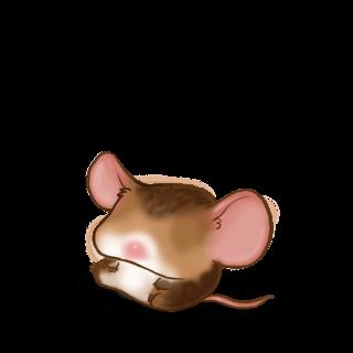 Adoptuj Mysz Kasztan