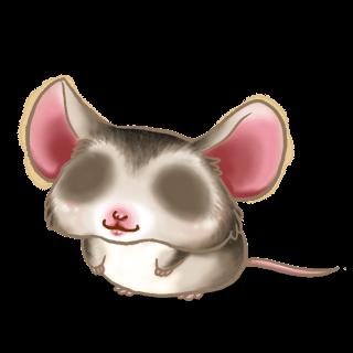Adoptuj Mysz Azjatyckie