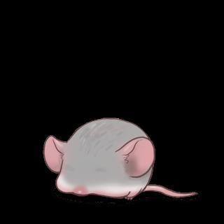 Adoptuj Mysz Srebrny