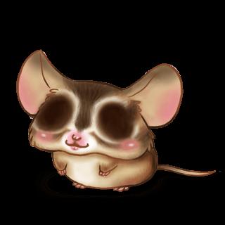 Adoptuj Mysz Wiewiórka
