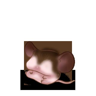 Adoptuj Mysz Sowa