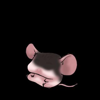 Adoptuj Mysz Czarny