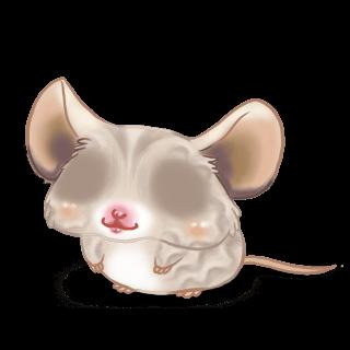 Adoptuj Mysz Piasek