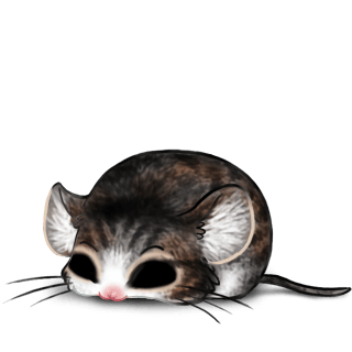 Adoptuj Mysz Simba