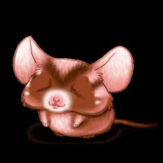 Adoptuj Mysz Toffi