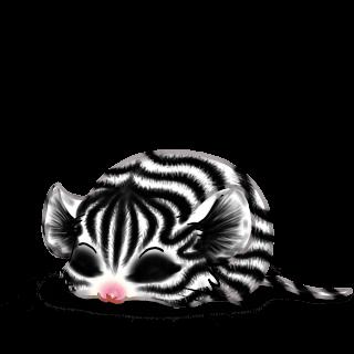 Adoptuj Mysz Zebra