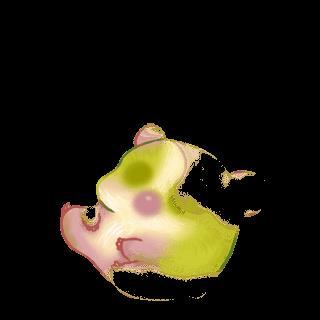Adoptuj Chomik Jabłko