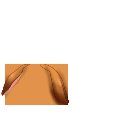 Królik Crème