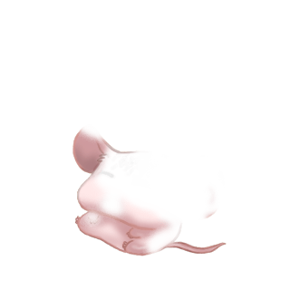 Adoptuj Mysz Słońce