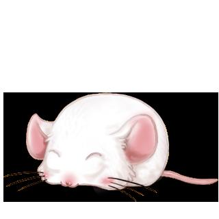 Mysz Chocolat au lait
