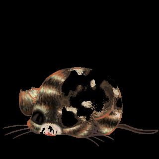 Adoptuj Mysz Blond