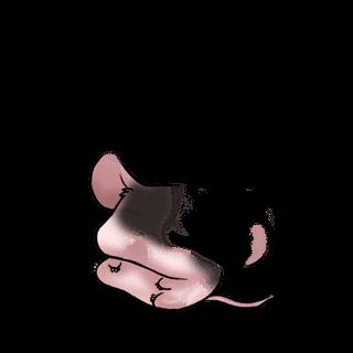 Adoptuj Mysz Pikantny