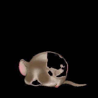 Adoptuj Mysz Biały