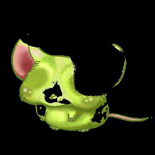 Mysz Abricot angora