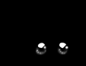 Adoptuj Chomik Czarno-biały