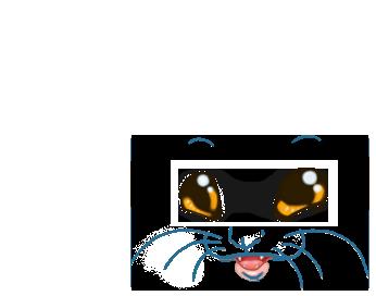 Adoptuj Fretka Niebieski tygrys